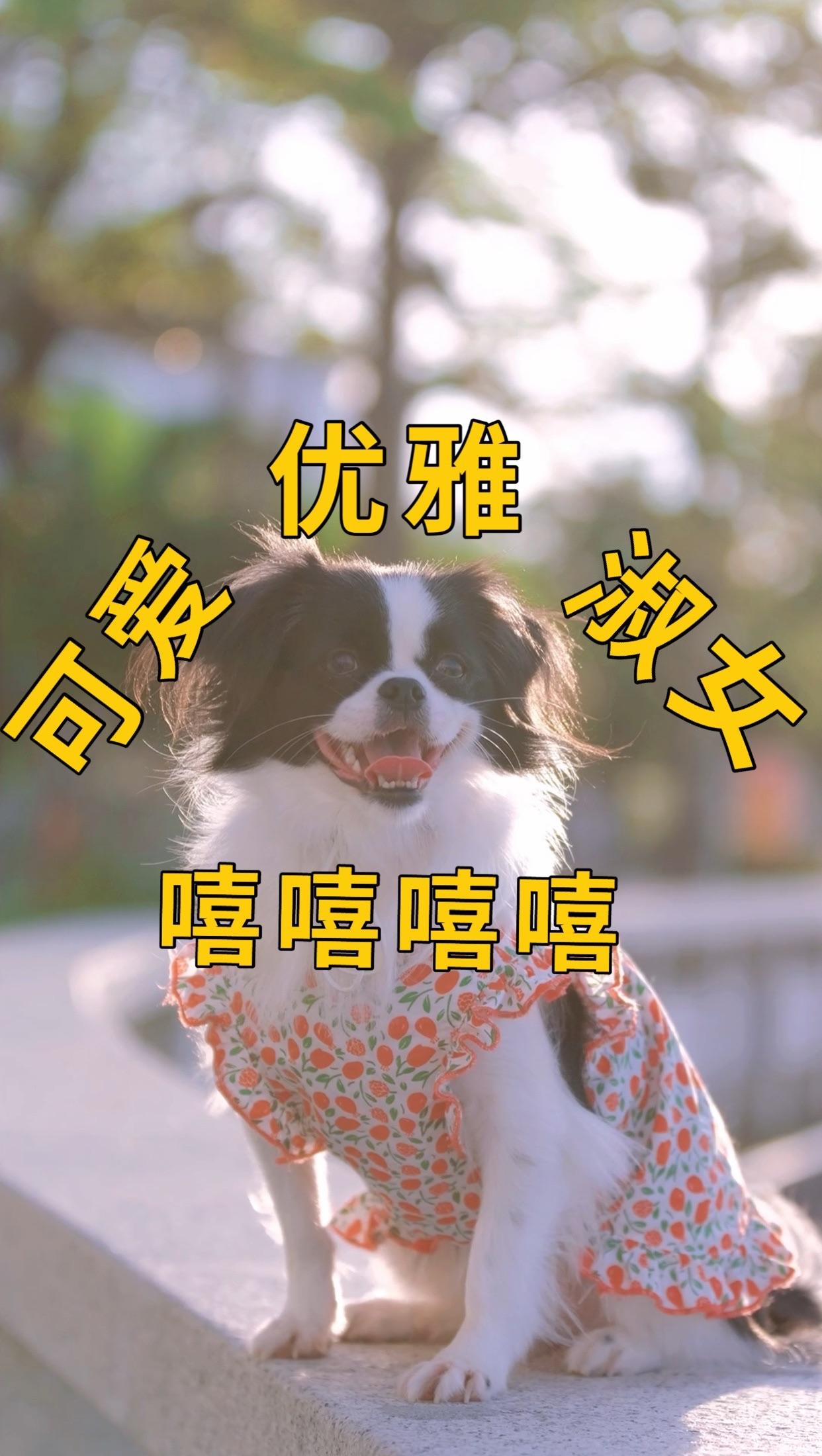 爱宠人士度假种草⛱️|惠州大亚湾度假公寓